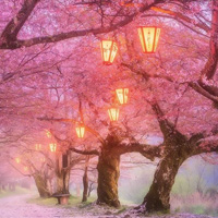 Free online flash games - Cherry Blossom Forest Escape