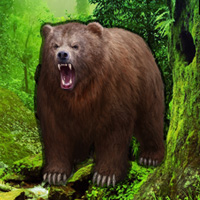 Free online flash games - Grizzly Bear Forest Escape