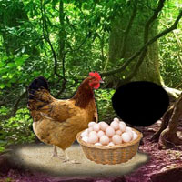 Free online flash games - Help The Incubation Hen