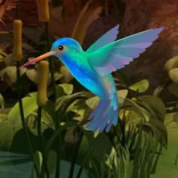 Doctor Bird Forest Escape HTML5