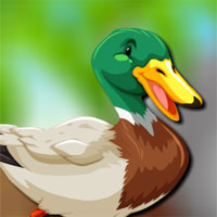 Free online flash games - Avm Mallard Duck Escape