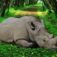 Free online flash games - WowEscape Save the Rhinoceros