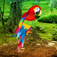 Games2rule Scarlet Macaw Forest Escape