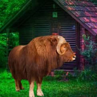 Free online html5 escape games -  Musk Ox Forest Escape HTML5