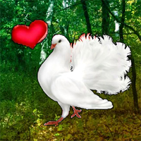Free online flash games - Wow Love Pigeon Forest Escape