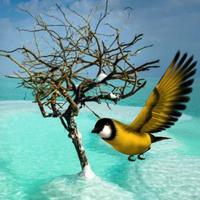 Free online html5 escape games - Dead Sea Friends Escape HTML5